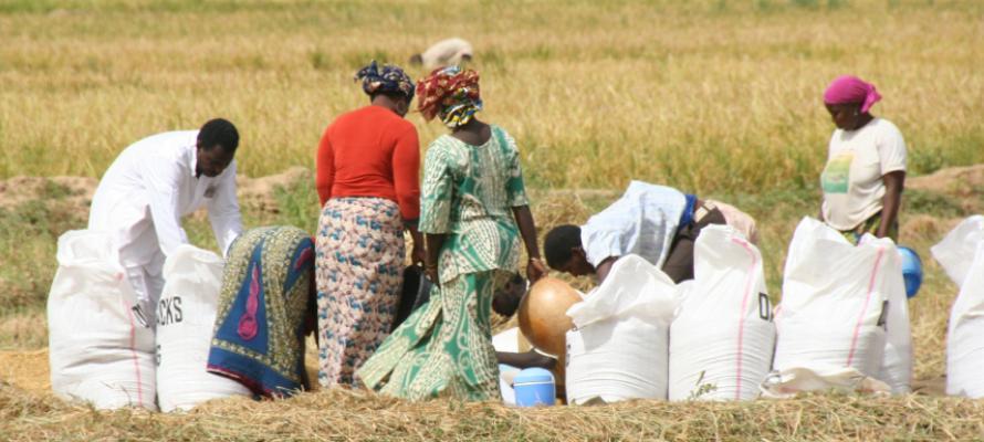 La Banque mondiale au secours des femmes leaders d'organisations de producteurs